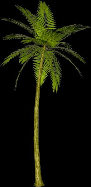 palmier png