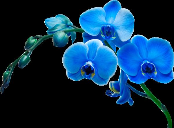 Синие картинки - 9