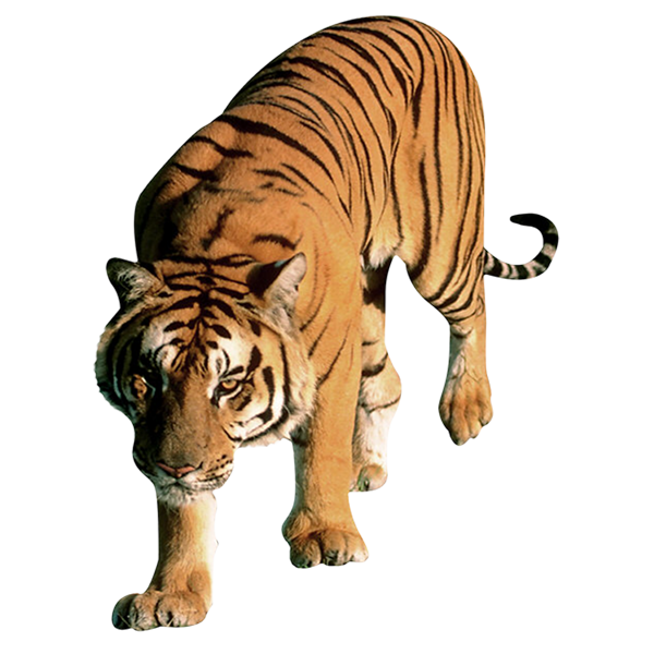 image animaux png
