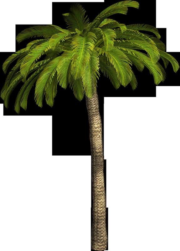 Nature palmiers - Image palmier ...