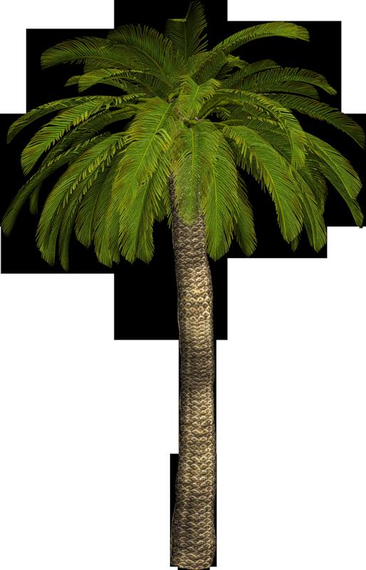 Nature palmiers - Arbre africain en 7 lettres ...