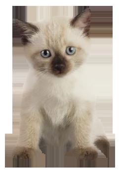 Chats - Image de petit chat ...