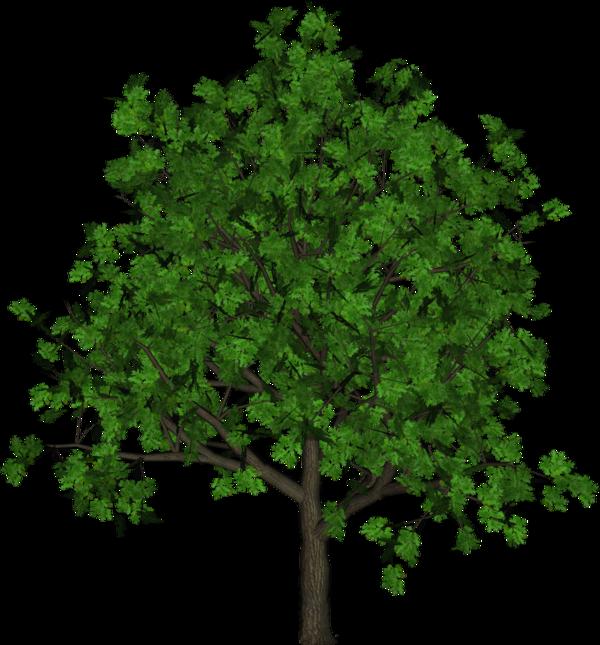 Силуэт деревьев картинки