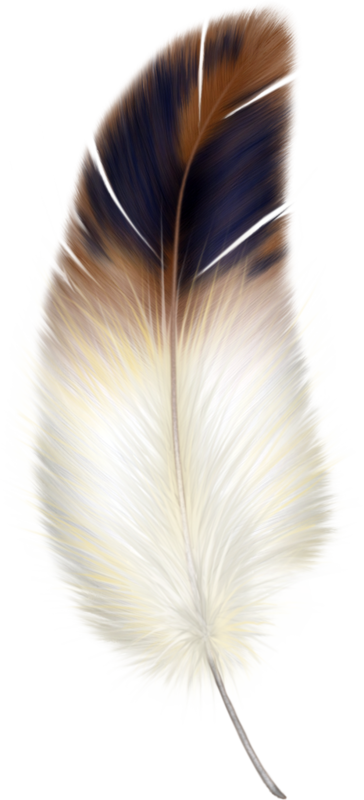 plumes oiseau turkey feather clipart black and white turkey feather clipart black and white