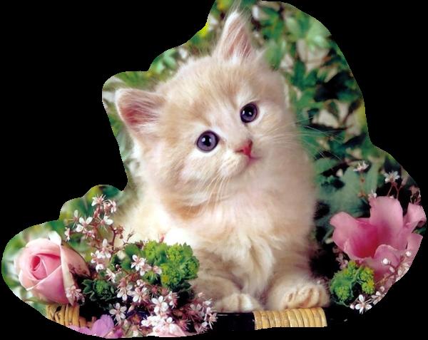 """Résultat de recherche d'images pour """"Chats et fleurs"""""""