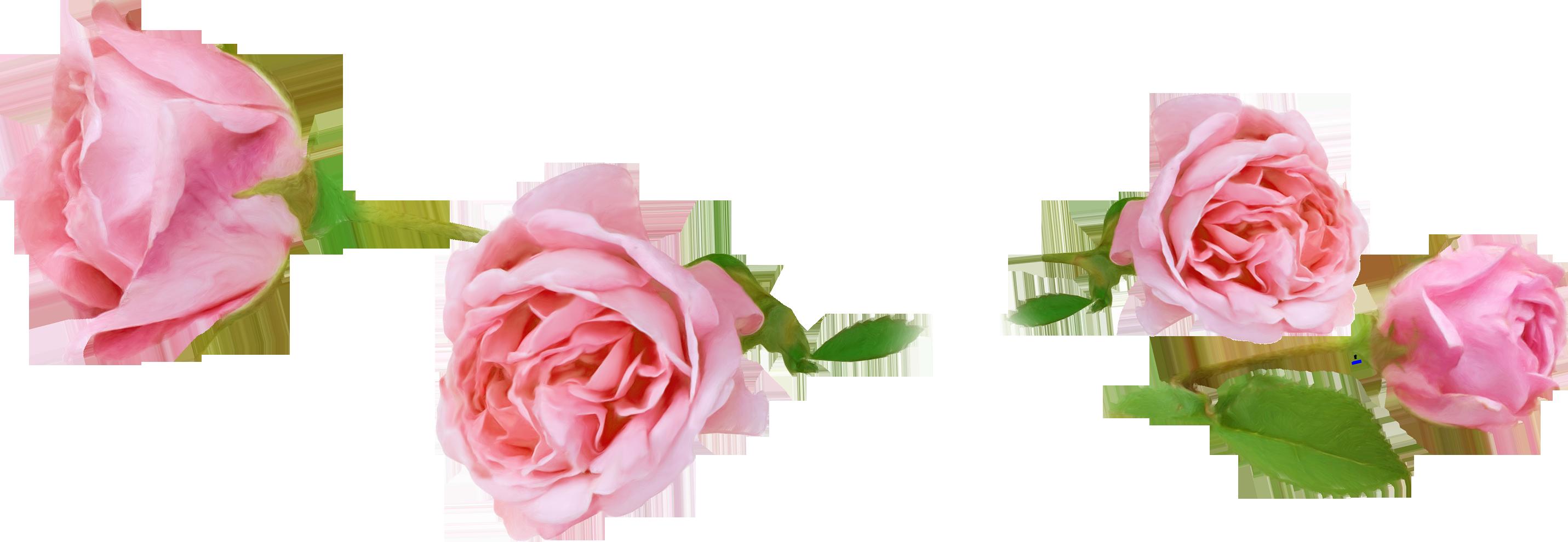 nature fleurs roses. Black Bedroom Furniture Sets. Home Design Ideas