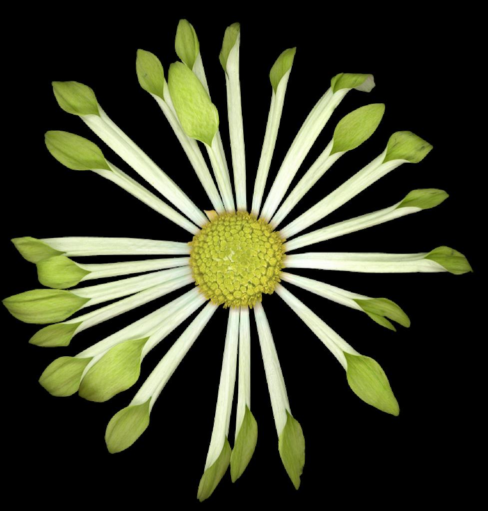 Nature fleurs vertes for Bouquet de fleurs vertes