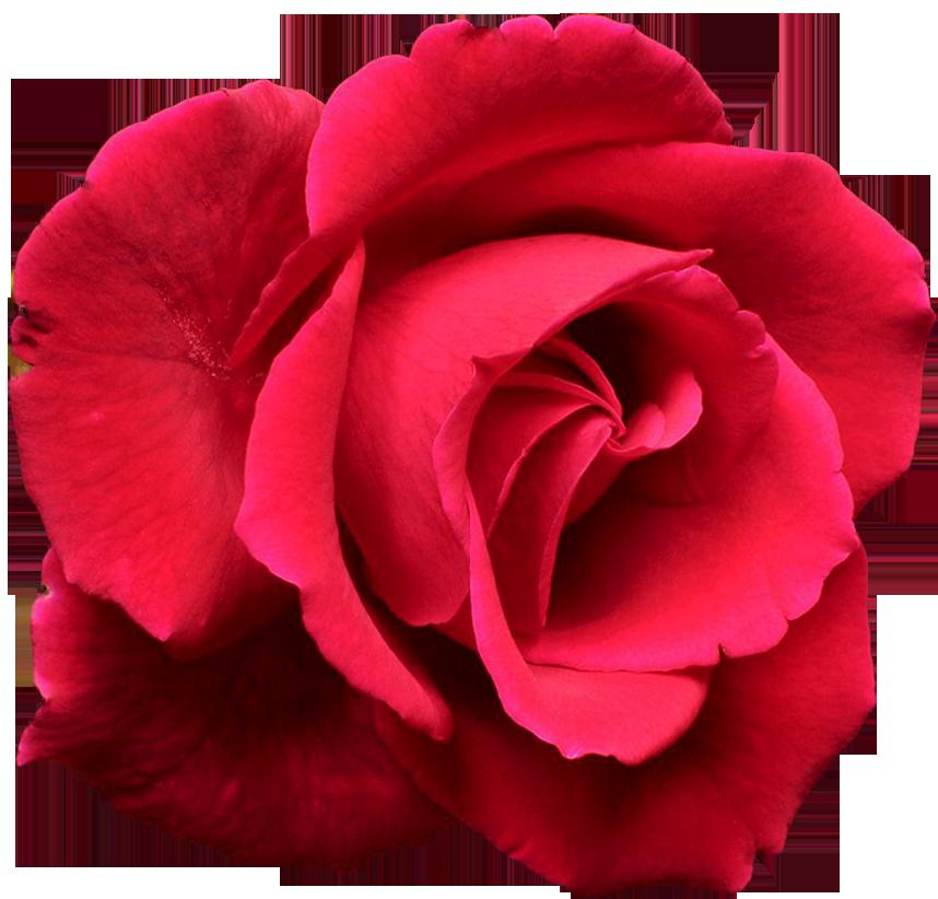 saint valentin roses rouges page 2. Black Bedroom Furniture Sets. Home Design Ideas