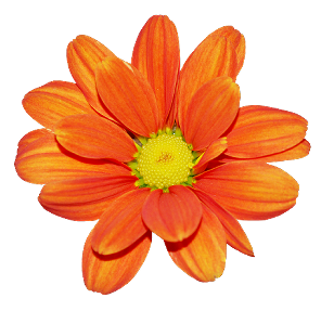 Real Flowers Png Mon recueil d'images p...